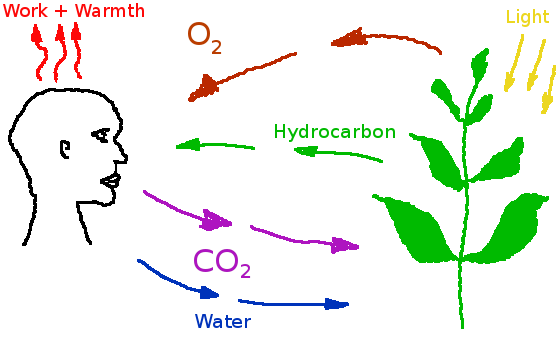 File:Carbon cycle simplified.png